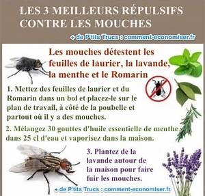 Plante Repulsif Mouche : les 3 meilleurs r pulsifs contre les mouches simples et naturels ~ Melissatoandfro.com Idées de Décoration