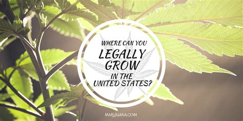 Where Can You Grow Marijuana Legally In The United States