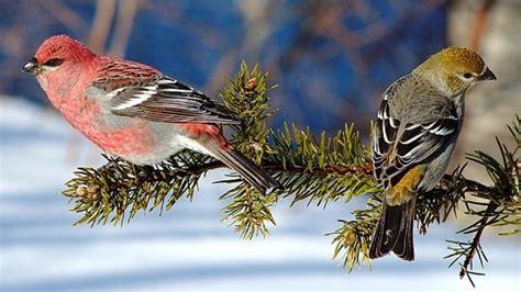winter bird wallpaper gallery