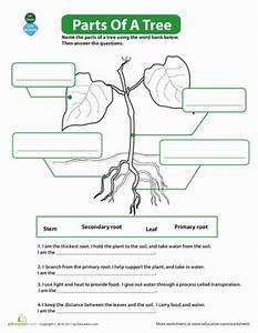 The Parts of a Tree | Worksheet | Education.com