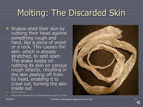 Snake Skin Shedding Lucky snakes