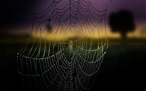 Wallpaper Background Hd by 21 Excellent Hd Spider Web Wallpapers Hdwallsource