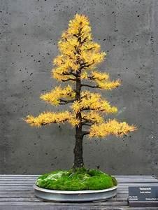 Bonsai Garten Hamburg : baum pflanzen kaufen lebensbaum hecke thuja smaragd 1 ~ Lizthompson.info Haus und Dekorationen