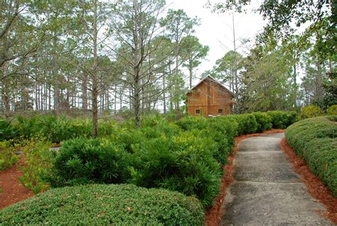 images landscape tree nature path pathway