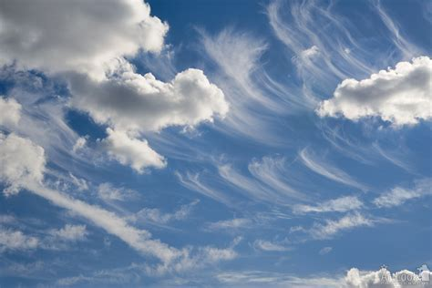 Curly Summer Clouds - ArtLook Photography