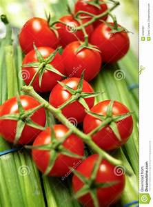 Cherry Tomatoes On Vine Royalty Free Stock Photography ...