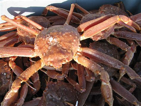 Dire Predictions For N.l. Crab And
