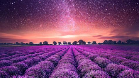 starry sky lavender field wallpapers hd wallpapers id