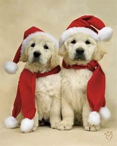 Lab pups | Cute Pets | Pinterest