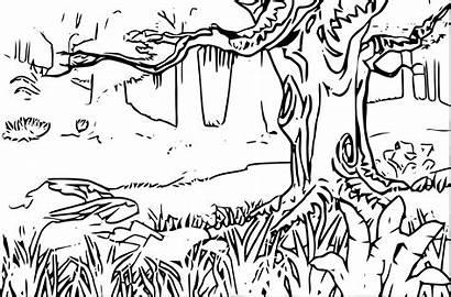 Coloring Forest Landscape Pages Rainforest Mountain Adults