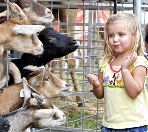 glow  event store petting zoo wagon rides glow