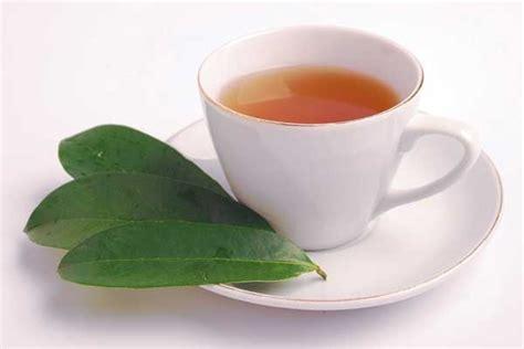 tanaman obat herbal untuk menyembuhkan asam urat jelly gamat
