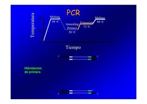 bureau de la pcr pcr y electroforesis biociencias 2010 pdf