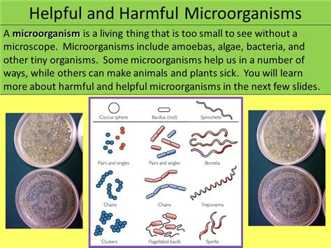 Cells And Microorganisms  Ppt Video Online Download. How To Register Domain For Free. San Bernardino Storage Units. Kaplan University Rn To Bsn Plan For College. Moving Companies Pasadena Tx. Wireless Phone Systems For Business. Free Cloud File Sharing Mountain Baker Skiing. Business Internet Service Providers By Zip Code. Cars With Touch Screen Navigation