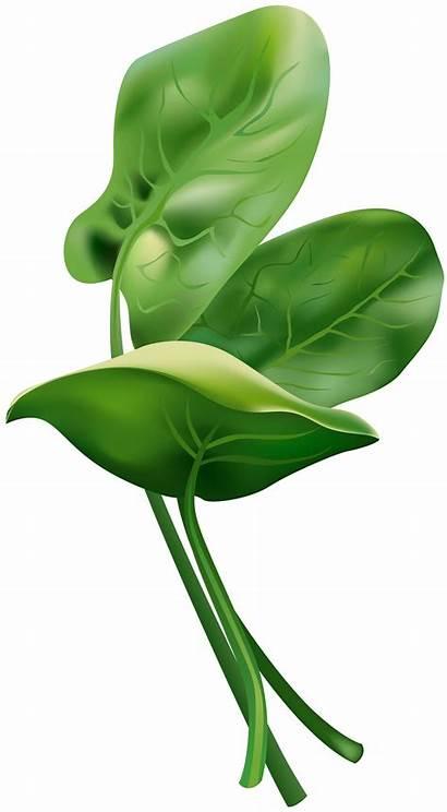 Spinach Yopriceville Clip Clipart Transparent Clipartix Clipartmag