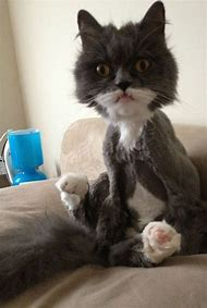 Stop Laughing Funny Cat Pictures