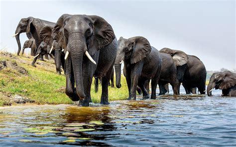 Elephant Hd Wallpaper Background Image 1920x1200 Id