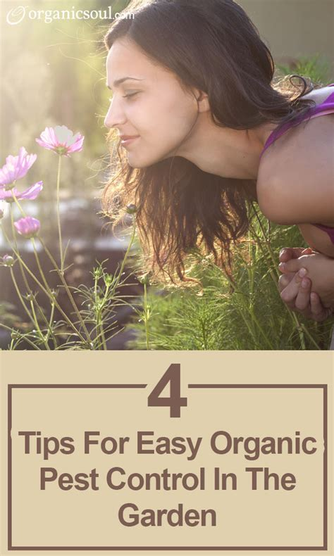 4 Tips For Easy Organic Pest Control In The Garden