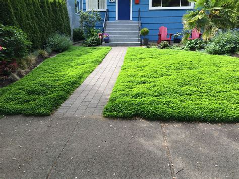 landscaping landscaping micro clover lawn alternative level ground landscape
