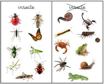 insecte ou pas insecte ecole sciences maternelle