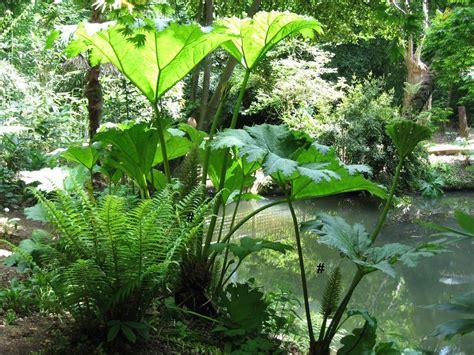 small tropical plants tropical garden design ideas gardens gunnera