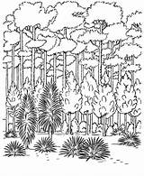 Coloring Nature Canopy Forest Garden sketch template