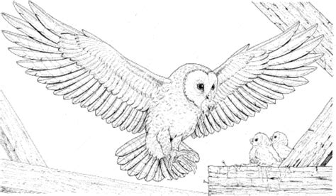 owl coloring pages   kids  apps  kids