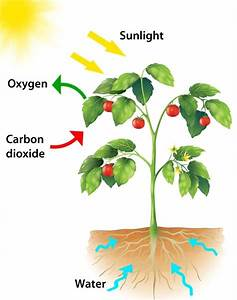 What Is Photosynthesis  And How Does It Work