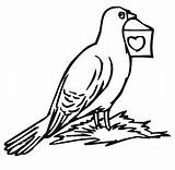 Pigeon Coloring Pages Printable Bird Colouring Bestcoloringpagesforkids Sheets sketch template