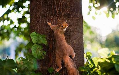Climb Tree Animals Protein Ready Wallpapers Rodents