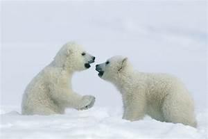 Cute polar bear cub waves and poses for photographer - AOL ...