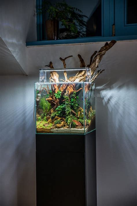 Small Tank Aquascaping by Yeah Aquascaping An Aquascape By Voladuson Big