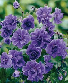flowers that spread quickly 1000 images about english cottage garden on pinterest flower seeds cottage gardens and
