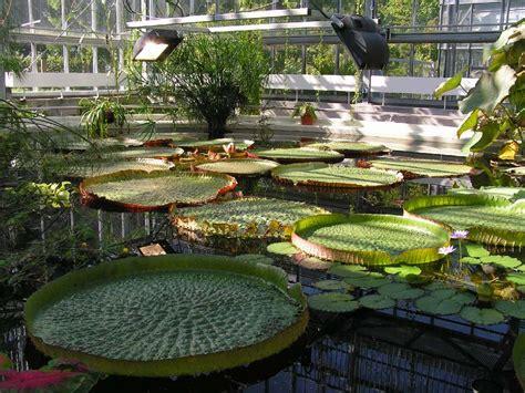 Botanischer Garten Leipzig 1 Foto & Bild Deutschland