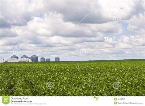 Background Crop Grain Bins And Soy Bean Crop Stock Image Image 43153317