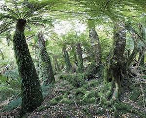 Un Moves To Protect Ancient Tasmanian Forests From The