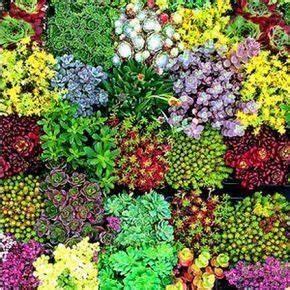 Pflanzen Günstig Kaufen : 12 robuste stauden f r den garten staudengarten staudenbeet und pflanzen ~ A.2002-acura-tl-radio.info Haus und Dekorationen