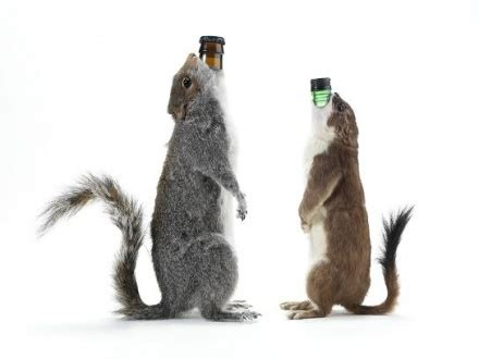 sink the bismarck squirrel becks timely brew news