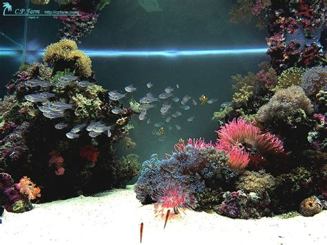 saltwater aquascape 17 best ideas about reef aquascaping on reef