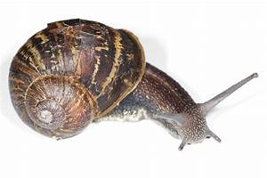 Free Snail  Download Free Clip Art  Free Clip Art On
