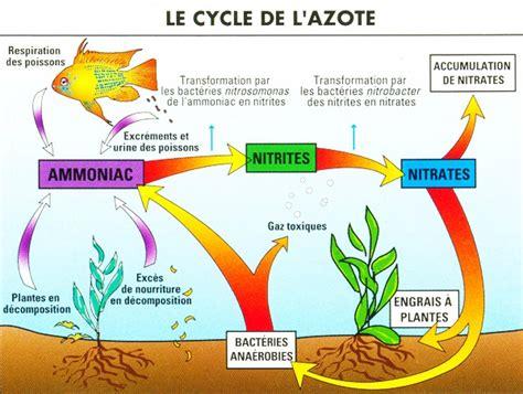 cycle de l eau aquarium lutyn nature