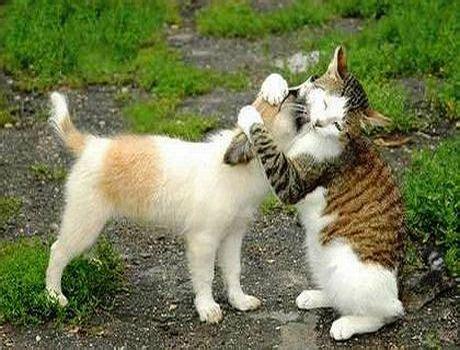 anjing  kucing lucu bangetgambar gambar aneh