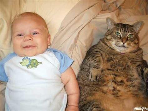Funny Cats And Babies On Tvoydosugcom