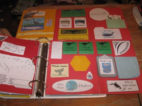 75 best about homeschool lapbooks on