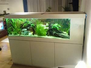 Aquarium Als Raumteiler : mein kleiner raumteiler 2 00m aquarienforum ~ Michelbontemps.com Haus und Dekorationen