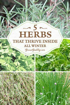 Growing Herbs Inside by 1000 Images About Growing Herbs Indoors On