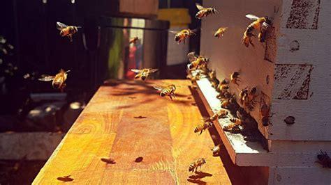 beekeeping    setup  adopt   hive