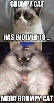 grumpy cat pictures obama grumpy cat quotes quotesgram