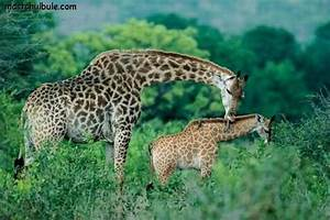 50 animal parents with their animal babies