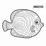 Angelfish Emperor Coloring Illustrations Vector Vectors Clip Fish Dreamstime Angel Children sketch template